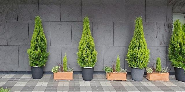 針葉樹のコニファーも賃貸物件の空室対策や入居者の満足度があがります