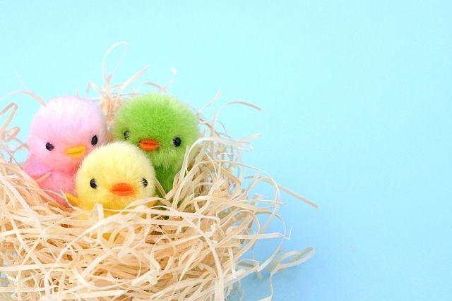 鳥(ハトなど)の巣を撤去すると法律違反になるの?