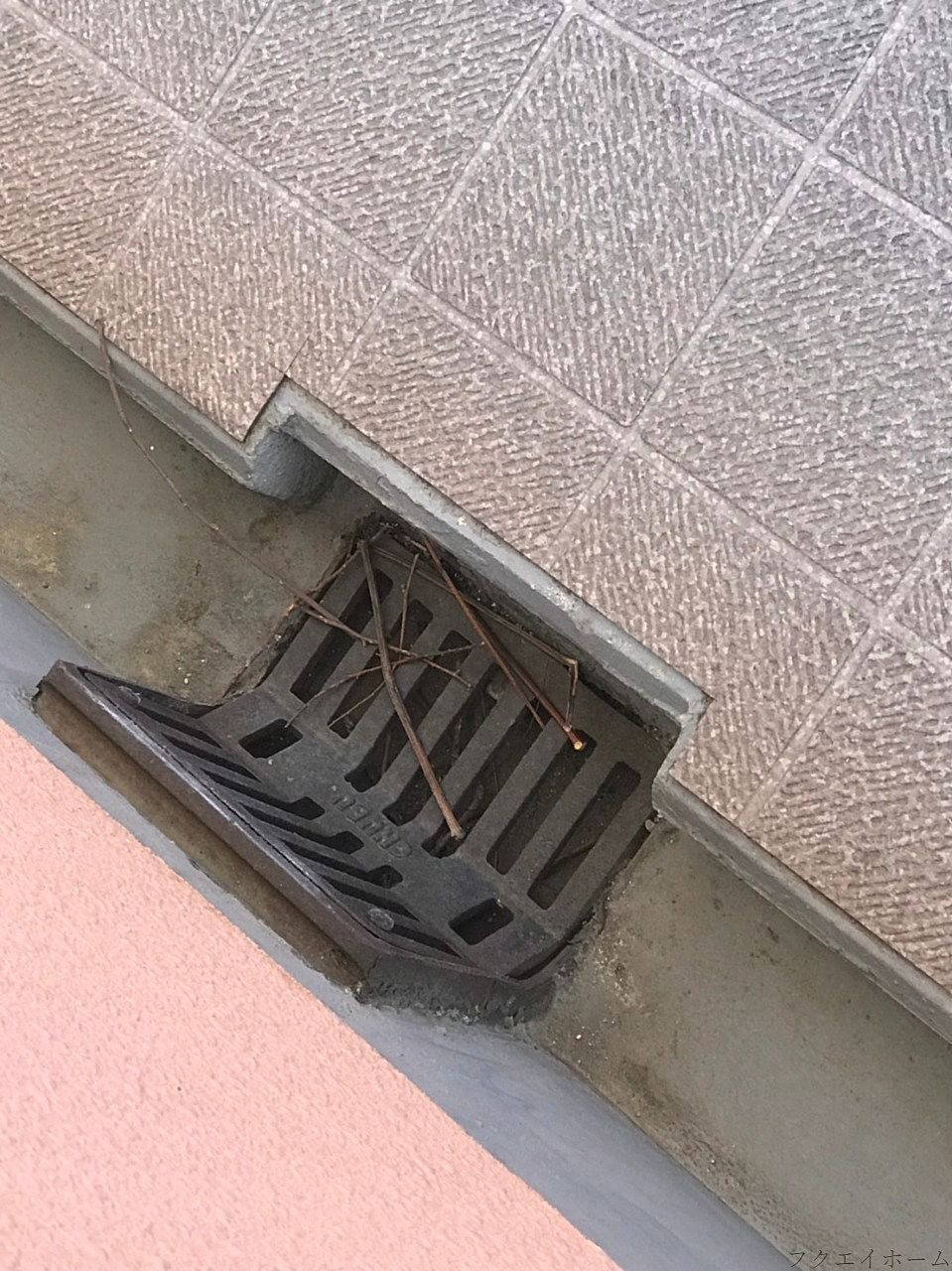 マンション通路の側溝でハトが巣をつくっている