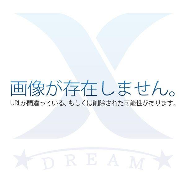 セアカゴケグモの特徴と対処方法の説明です