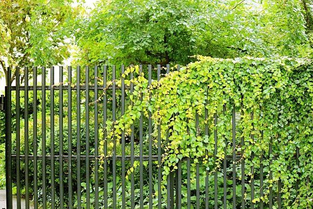 空き家の庭木が隣に伸びてきた時の解決方法