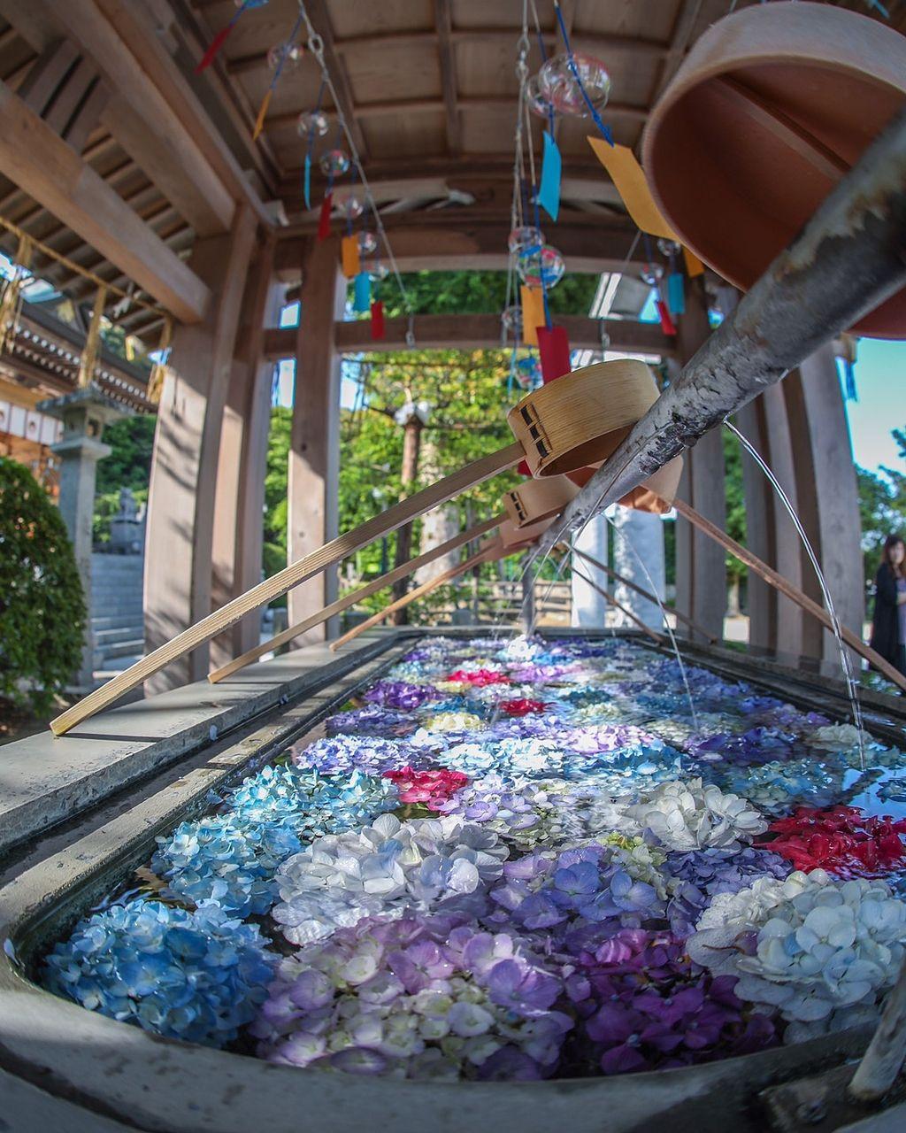 春日神社の紫陽花が飾っていたの手水舎です