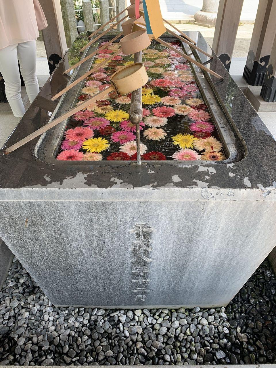 春日神社の手水舎がガーベラで飾られていました